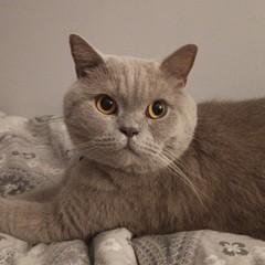 Zdjęcie przedstawia dumnego kota Olafa.