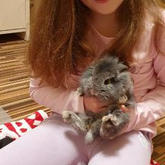 Kamila i królik Timo