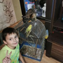Patryk i papuga Oli,  kot Kićka