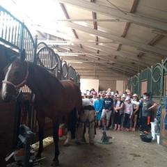 Podkuwanie konia