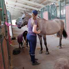Pracownica stajni czyści konia.