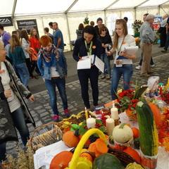 Galeria Festiwal Dyni