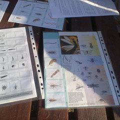 Galeria Własności biologiczne i fizykochemiczne naszych rzek